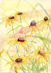 Art: Rudbekia (6) by Artist John Wright