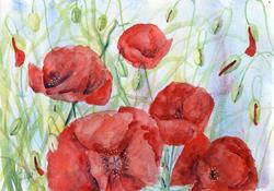 Art: Poppies (74) by Artist John Wright