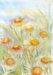 Art: Daisies (10) by Artist John Wright