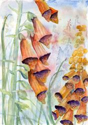 Art: Foxgloves (16) by Artist John Wright