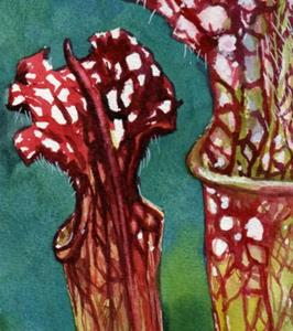 Detail Image for art Trumpet Pitchers