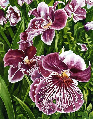 Art: Pansy Orchids by Artist Mark Satchwill