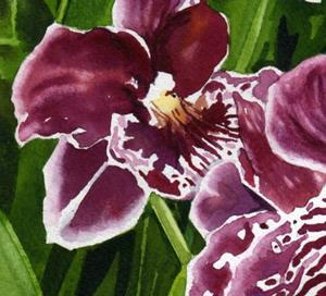 Detail Image for art Pansy Orchids