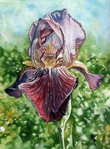 Art: Bearded Iris by Artist Mark Satchwill