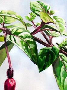 Detail Image for art Dad's Fuchsias