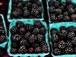 Art: Blackberries--Yum! by Artist Deanne Flouton