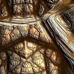 Detail Image for art Tortoise Shell