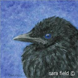 Art: Crow Baby (Simp) by Artist Sara Field