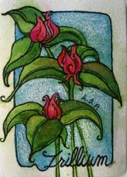 Art: ACEO May 'Theme Week' Challenge: A Trio of Trillium by Artist Patience