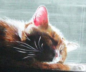 Detail Image for art Sunkist