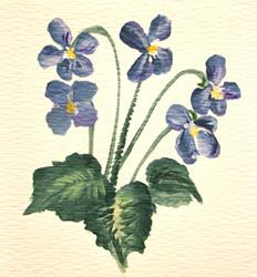 Art: Sweet Violets by Artist Leea Baltes