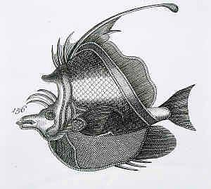Detail Image for art Schley Fish