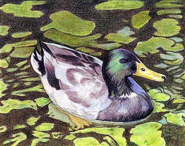 Art: Just Ducky by Artist Ulrike 'Ricky' Martin