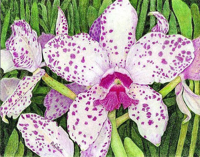 Art: Cattleya Orchid by Artist Ulrike 'Ricky' Martin
