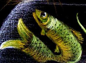 Detail Image for art Trout for Lunch