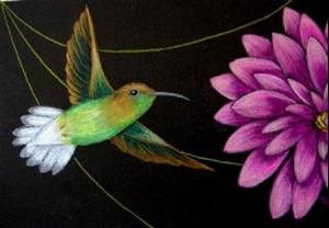 Detail Image for art Coppery-headed Emerald Hummingbird (SOLD)