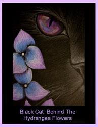 Art: Black Cat Behind The Hydrangea Flowers by Cyra R. Cancel