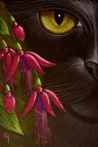 Detail Image for art BLACK CAT - FUCHSIA FLOWERS OSWOA