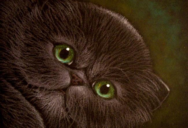Chinchilla Cats For Sale Florida