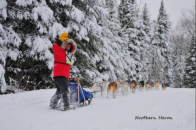 Art: Mushing Through the Evergreens by Artist Stephanie M. Daigle