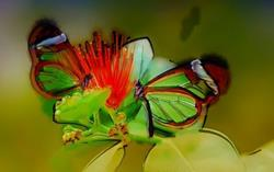 Art: Dragonflies on a Flower by Artist Mario Carini