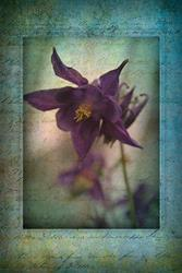 Art: Columbine Remembrances by Artist Carolyn Schiffhouer