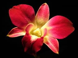 Art: Purple Orchid by Artist Rebecca M Ronesi-Gutierrez