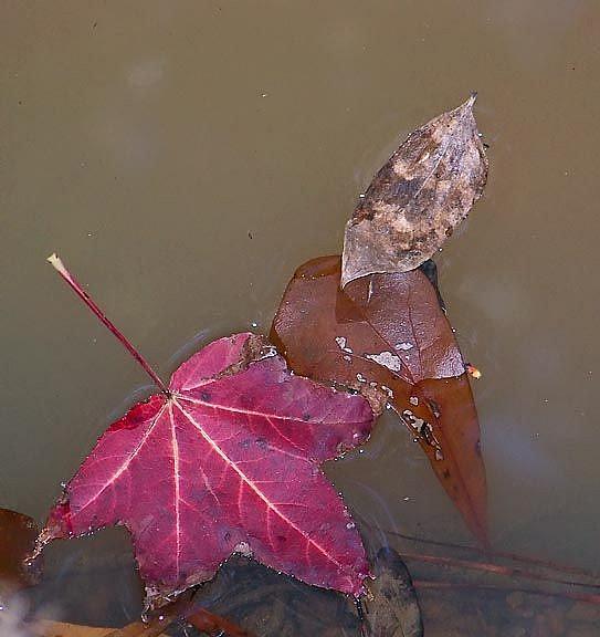Art: Creek Leaves 4 of4 by Artist Windi Rosson