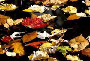 Detail Image for art Red Leaf