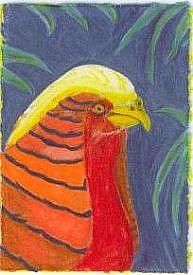 Detail Image for art what you looking at?  rip of Diana's Golden Pheasant