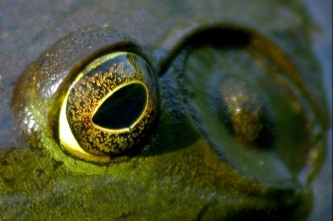 Art: in a frogs eye by Artist W. Kevin Murray