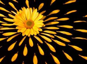 Detail Image for art extemporaneous daisy