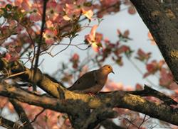 Art: Perched among the Dogwoods by Artist W. Kevin Murray