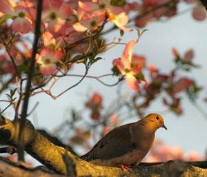 Detail Image for art Perched among the Dogwoods