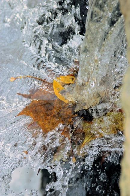 Art: Autumn Leaf Splash by Artist W. Kevin Murray