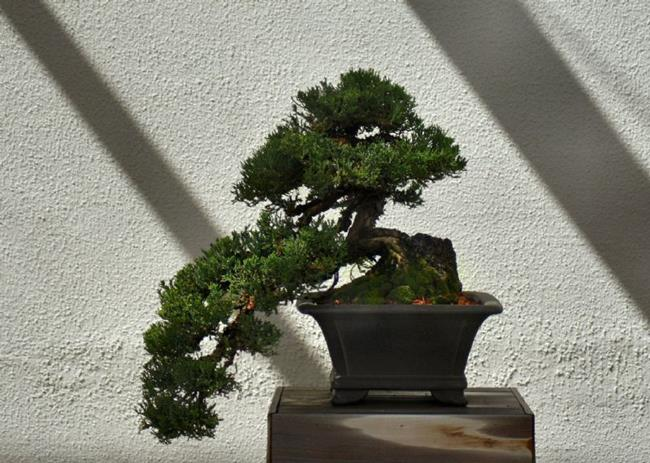 Art: Bonsai by Artist W. Kevin Murray