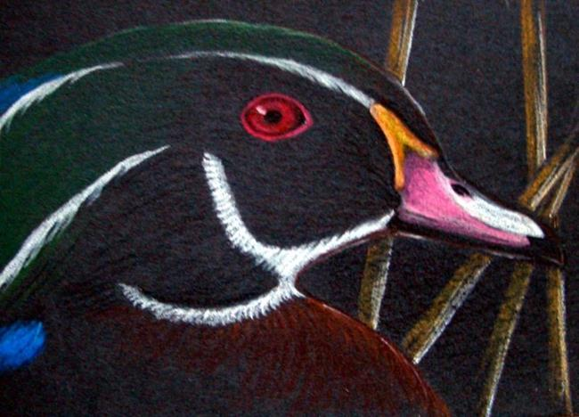Paintings of Birds and Waterfowl - Bird Paintings by Marilyn Marsh