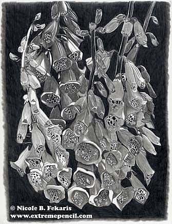 Art: Fine Foxglove by Artist Nicole Fekaris