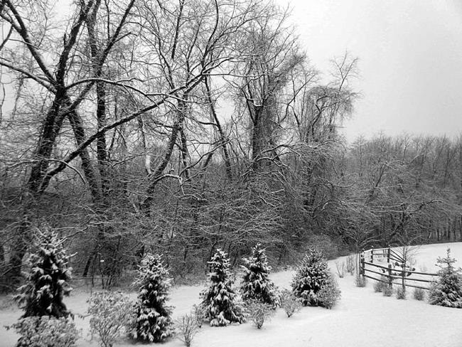 Art: Escape in Winter Woods by Artist Chris Jeanguenat