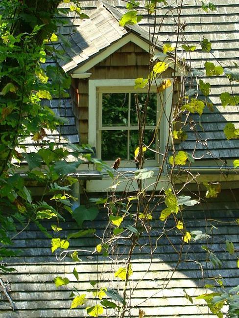 Art: Window and Vines by Artist Leea Baltes