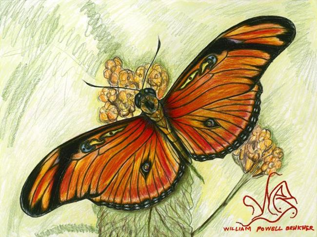 Art: butterfly4 by Artist William Powell Brukner
