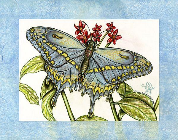 Art: butterfly10 by Artist William Powell Brukner