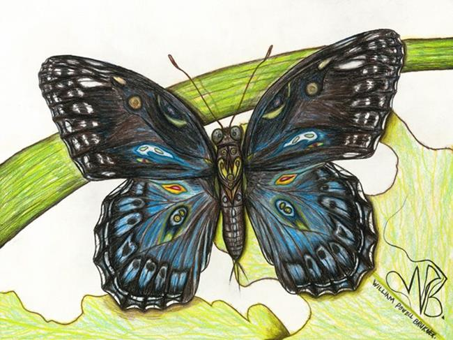 Art: butterfly3 by Artist William Powell Brukner