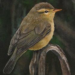 Art: Warbler by Artist Tabatha  Rhodes