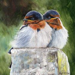 Art: Baby Swallows by Artist Janet M Graham