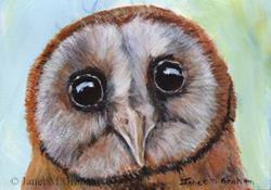 Art: Owl ACEO by Artist Janet M Graham
