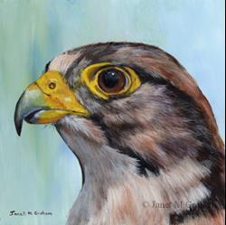 Art: Lanner Falcon by Artist Janet M Graham