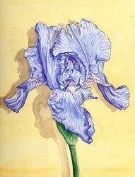 Art: Blue Iris by Artist Mark Satchwill
