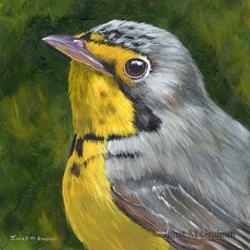 Art: Canada Warbler by Artist Janet M Graham
