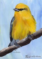 Art: Blue Winged Warbler ACEO by Artist Janet M Graham